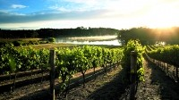 Japan trade agreement could spur beleaguered Australian wine exports