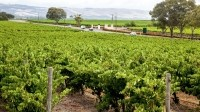 Orchard process provides cool solution to heat stressed vines