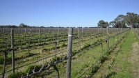 The Bruer winery in South Australia stands to gain from easier market access