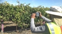 Bird's-eye vine view could show stresses in wider Aussie agriculture