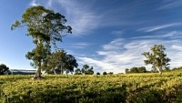 Wet weather puts Australian wine in good stead for late 2017 vintage